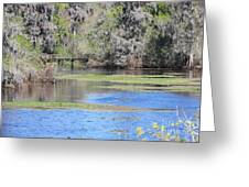 Lettuce Lake With Bridge Greeting Card
