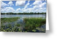 Leu Gardens Waterscape Greeting Card