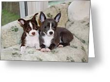 Lexi And Gracie Greeting Card