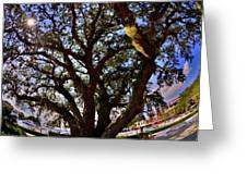 Liberty Oak Harbour Town Hilton Head Sc Greeting Card by Lisa Wooten