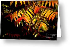 Library Leaves Greeting Card