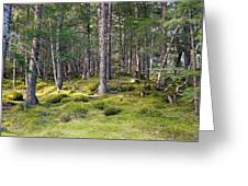Lichen Covered Mountain Floor Greeting Card