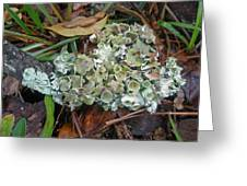 Lichen On Dead Branch Outer Banks North Carolina Usa Greeting Card
