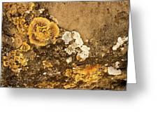 Lichen On The Piran Walls Greeting Card
