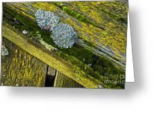 Lichen On Wood. Greeting Card