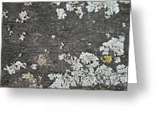 Lichen On Wood Greeting Card