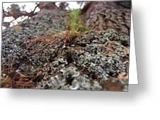 Lichen Tower Greeting Card