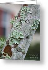 Lichens 2 Greeting Card
