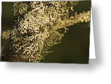 Lichens In Oregon Greeting Card