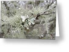 Lichens In The Plums Greeting Card