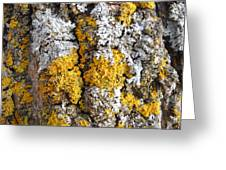 Lichens On Tree Bark Greeting Card