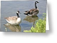Life Is Good For Canadian Geese Greeting Card