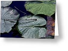 Life Of A Lily Pad Greeting Card