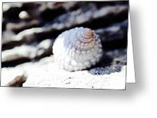 Life Of A Shell In Eleuthera Greeting Card