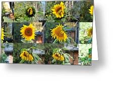 Life Of A Sunflower Greeting Card