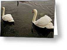 Life Of Swans. Greeting Card