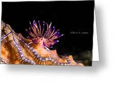 Life On A Reef Greeting Card