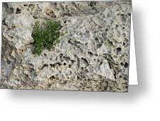 Life On Bare Rock - Pockmarked Limestone And Thyme Greeting Card