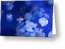 Life Wonders Of The Sea Greeting Card