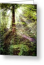Light Along The Trail Greeting Card