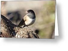 Light And Dark Of A Junco Greeting Card