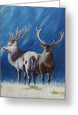 Light And Dark Stags Greeting Card