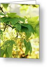 Light And Leafy Greeting Card