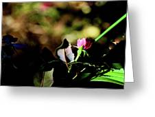 Light And Shadow In The Garden Greeting Card