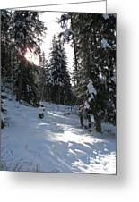 Light And Shadow On A Snowy Landscape Greeting Card