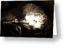 Light As He Tries To Sleep Greeting Card