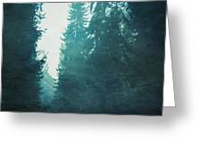 Light Coming Through Fir Trees In Mist Greeting Card