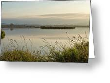Light Falling Softly On The Marsh Greeting Card