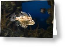 Light Fish Greeting Card