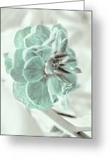Light Green Blossom Greeting Card