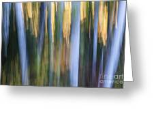 Light In Evening Forest Greeting Card
