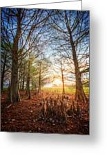 Light In The Cypress Trees II Greeting Card