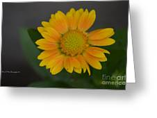 Light In The Darkness Greeting Card