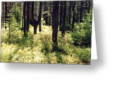 Light In The Forest Greeting Card