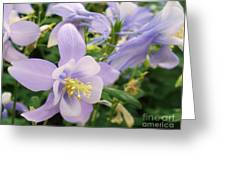 Light Lavender Flowers Greeting Card