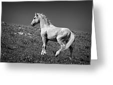 Light Mustang 1 Bw Greeting Card