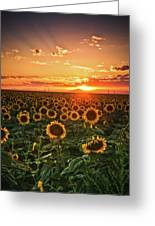 Light Of The Plains Greeting Card
