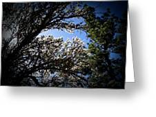 Light Off The Ironwood Greeting Card