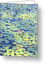 Light On Lily Pads Greeting Card