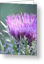 Light On Thistle Greeting Card
