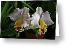 Light Pink And Yellow Orchid Greeting Card