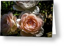 Light Pink Roses Greeting Card