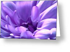 Light Purple Beauty Greeting Card
