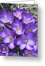 Light Purple Greeting Card