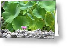 Light Purple Water Lily And Large Green Leaves Greeting Card
