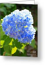 Light Through Blue Hydrangeas Greeting Card